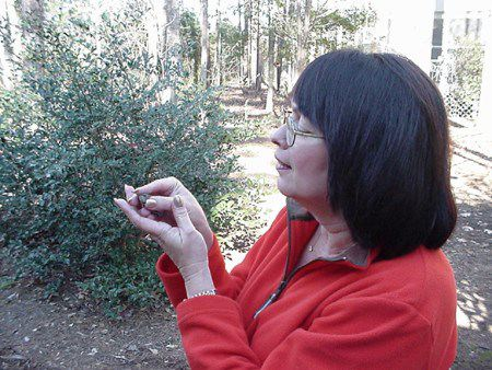 Kay Goodman with winter vagrant Rufous Hummingbird, Selasphorous rufus