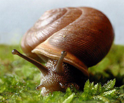 Land snails along