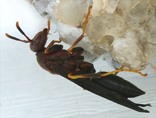 brown wasps loren eiseley essay Loren eiseley, lincoln, ne 320 likes loren eiseley was a highly respected anthropologist, science writer, ecologist, poet the brown wasps (perishable press) a collection of three.